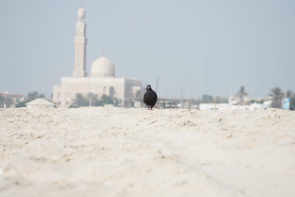 Dubai-V.A.E.
